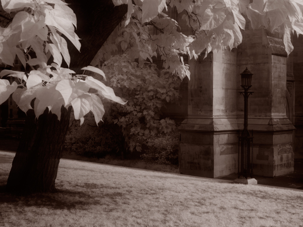 Infrared picture of a tree in a churchyard
